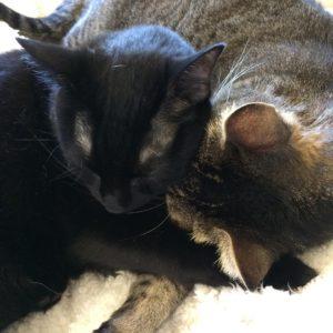 Serious Sunday Snoozing! cats catsofinstagram catstagram sleepingcat blackcat tabbycat meowhellip