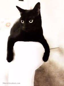 penelope kitten