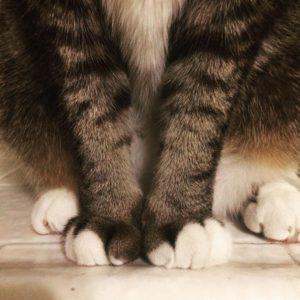 Tabby Paws by Hamlet    cat tabbycat tabbyhellip