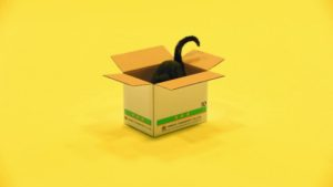 Yamoto Transport black cat in the box