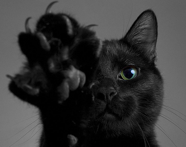 black-cat-black-cats-cat-cat-claws-cat-paw-favim-com-242281