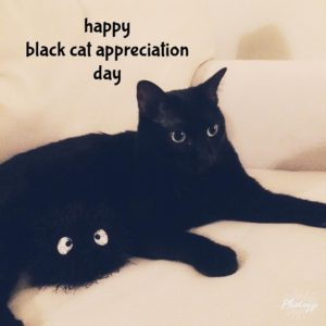 Penelope Kitten wishes everyone a very happy Black Cat Appreciationhellip