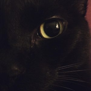 CatEye by Penelope    cat catsofinstagram cateyes blackcathellip