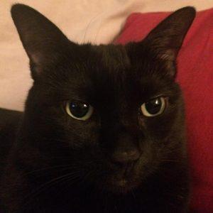 Penelope is still feeling a little bit miffed about lasthellip
